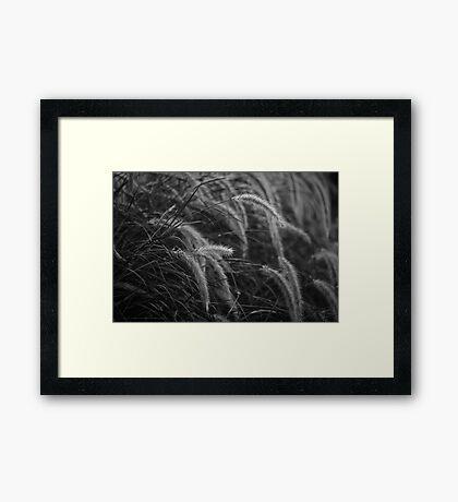 Morning Dew Framed Print