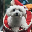 Dog in a Backpack by MattVachonPhoto