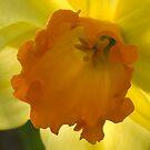 Daffodowndilly by Susan A Wilson