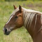 Belgian mare by Tracey  Dryka