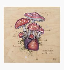 Toadstool Heart (Amanita Muscaria) Photographic Print