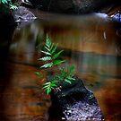 Dante's Glen pool, Lawson Blue Mountains NSW by Dot Radley