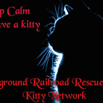 Keep Calm & Save a Kitty by URRKN