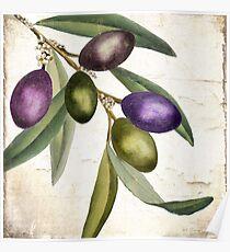 Olive Branch I Poster