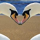 Swan Love by Fjfichman