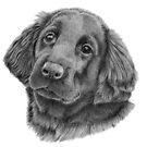 Flatcoated retriever puppy by doggyshop
