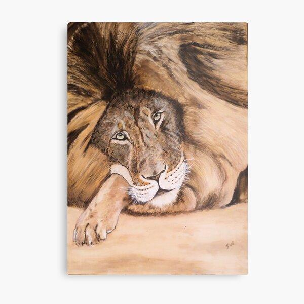 Lion relaxing. Metal Print