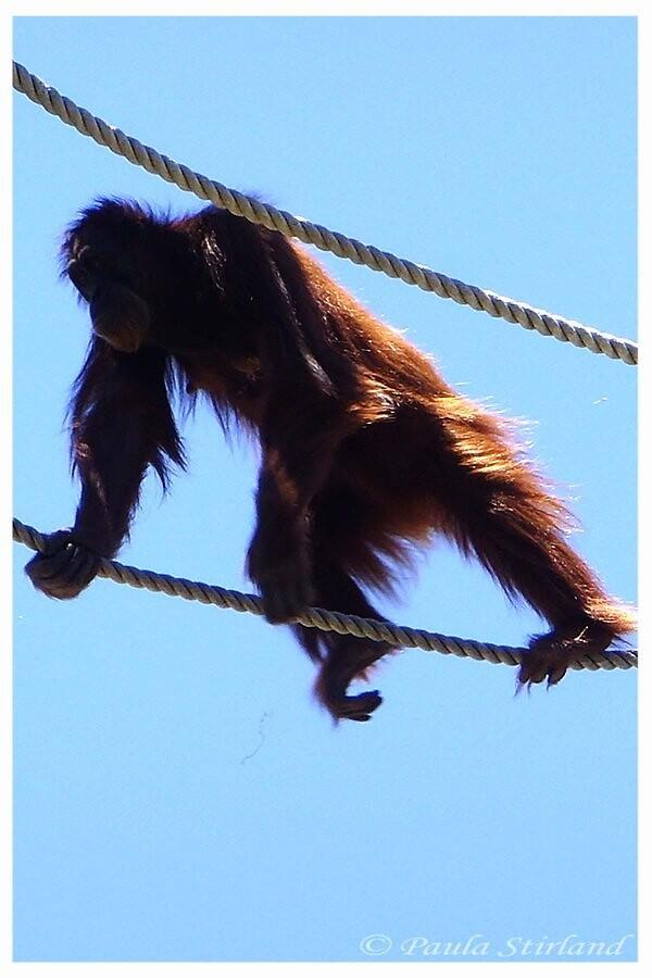 Mums walk tight ropes  by Gozza