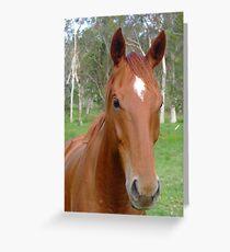 Horse Grußkarte