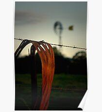 Aussie bush evening Poster