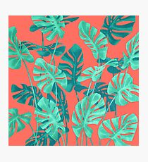 Monstera leaves on living coral. Photographic Print
