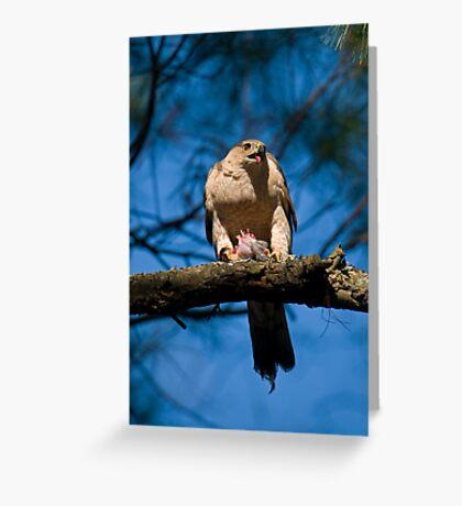 Feeding Cooper's Hawk Greeting Card