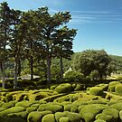 The Overhanging Gardens of Marqueyssac  by Amanda White