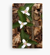 Three Painted Trilliums Canvas Print