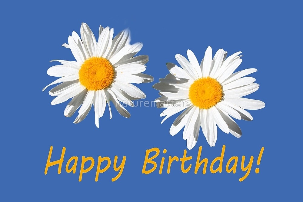 two lovely white daisy flowers  happy birthday floral photo art. by naturematters