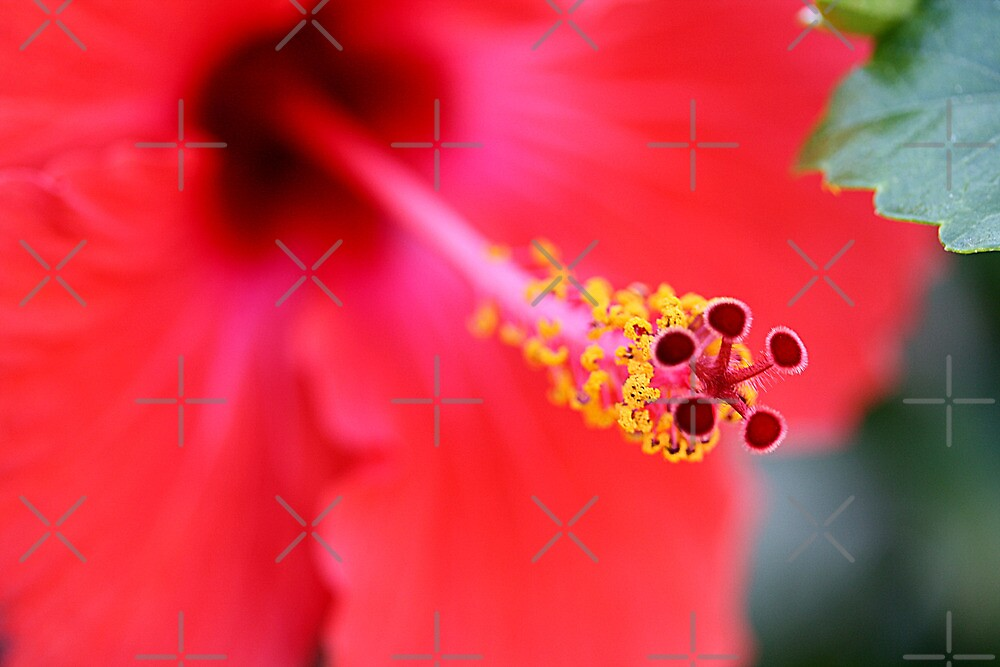 Red Hibiscus 6 by TeAnne