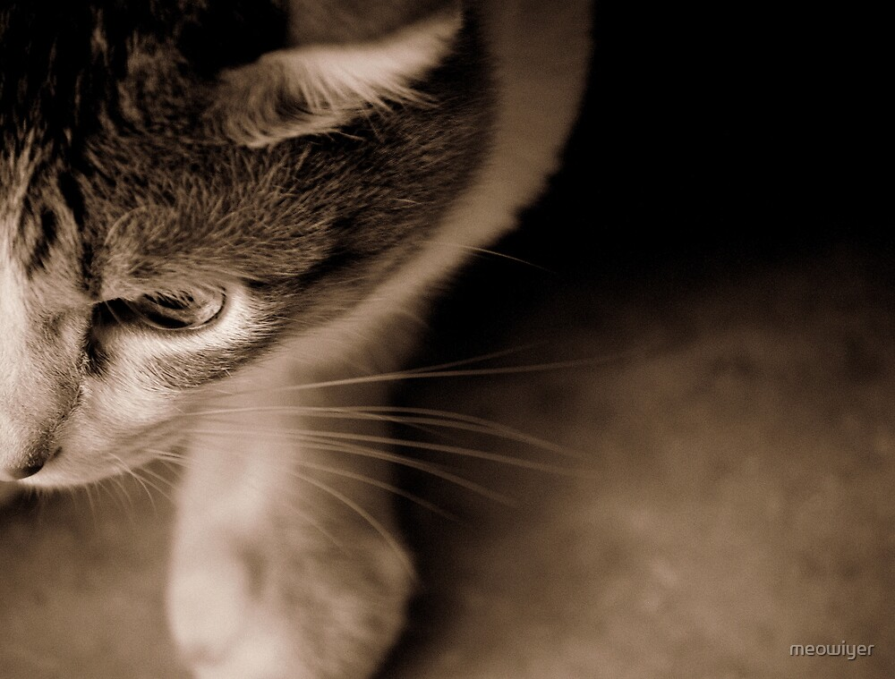 Sepia Toned Loving by meowiyer
