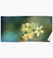 Dreamy hint of spring Poster