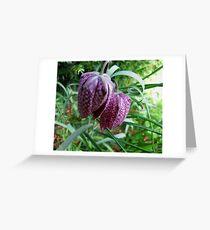 Fritillary Greeting Card