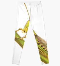 Grasshopper Leggings