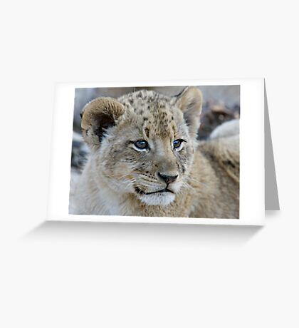 Male Lion Club Greeting Card