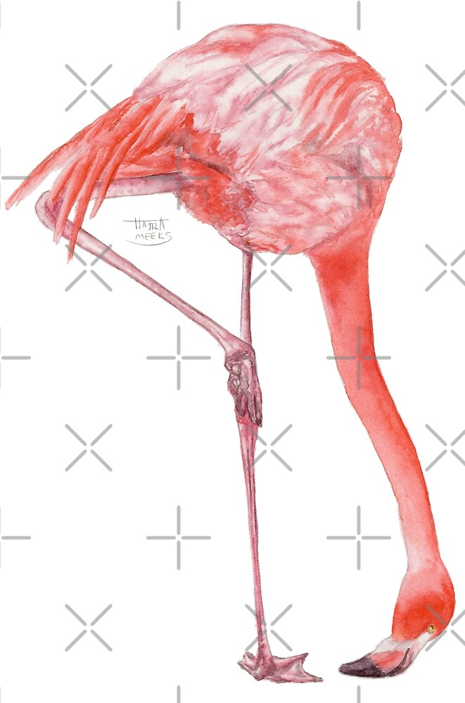 Watercolor Flamingo  by HAJRA MEEKS