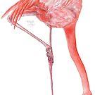 Watercolor Flamingo  by HAJRA MEEKS