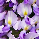 Wisteria by Margaret Barry