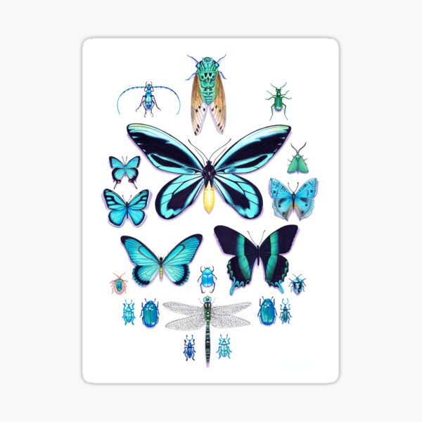Teal Insect Collection Sticker