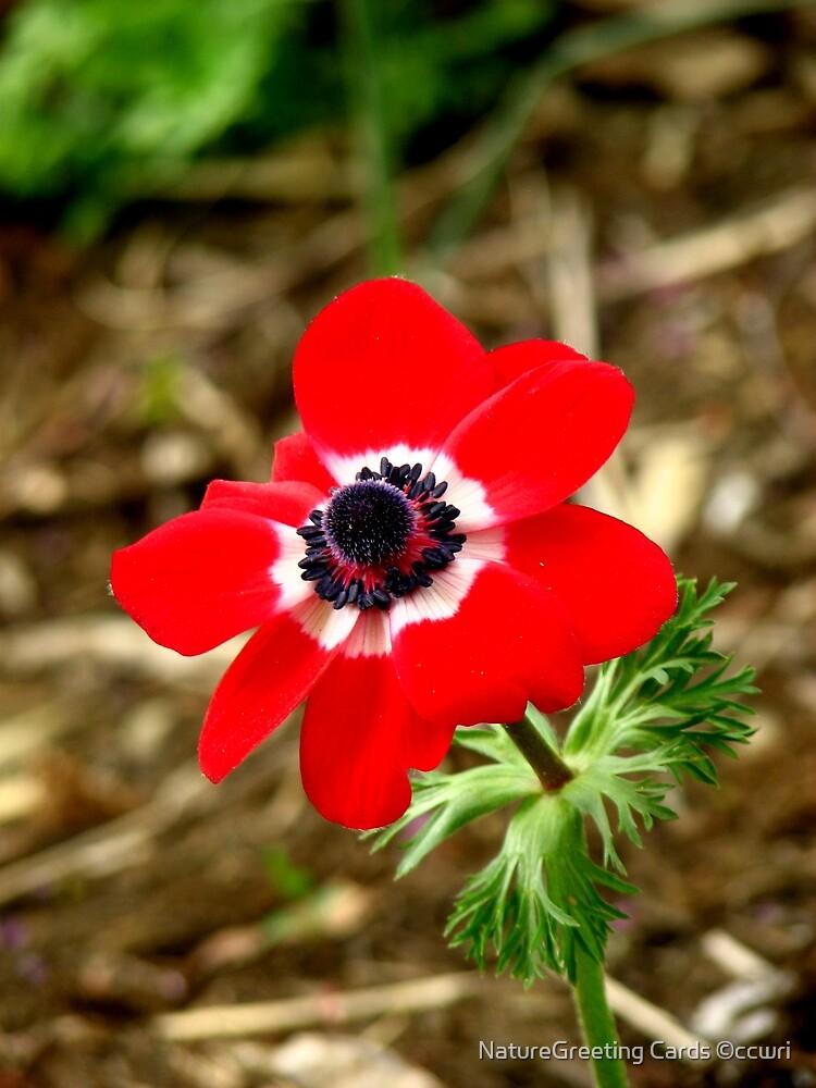 Soooooo Red by NatureGreeting Cards ©ccwri