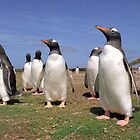 King penguins party by leksele
