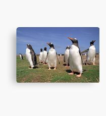 King penguins party Canvas Print