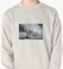 Cat OMG Pullover
