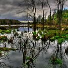 AMERICAN WETLAND by MIKESANDY