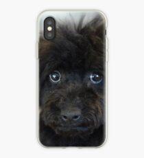 Sky, An Arizona Mini-Toy Poodle iPhone Case