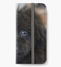 Sky, An Arizona Mini-Toy Poodle iPhone Wallet/Case/Skin