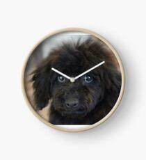 Sky, An Arizona Mini-Toy Poodle Clock
