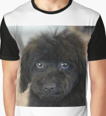 Sky, An Arizona Mini-Toy Poodle Graphic T-Shirt