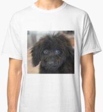 Sky, An Arizona Mini-Toy Poodle Classic T-Shirt