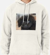 Sky, An Arizona Mini-Toy Poodle Pullover Hoodie