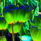 Tulips in a Whole Different Light #2 by Jennifer Hulbert-Hortman