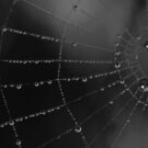 Water storage spider style by CezB