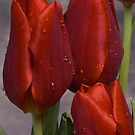 Red Satin by Jan Cartwright