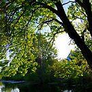 Tree Glow by Sunshinesmile83