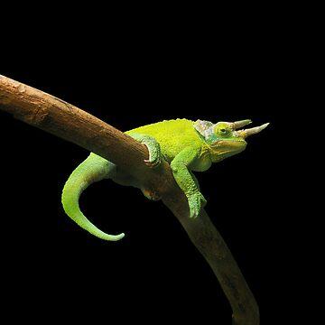 chameleon by scotnamese