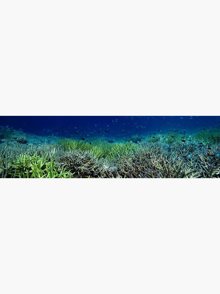 Reef Flat at Kamatal by neoniphon