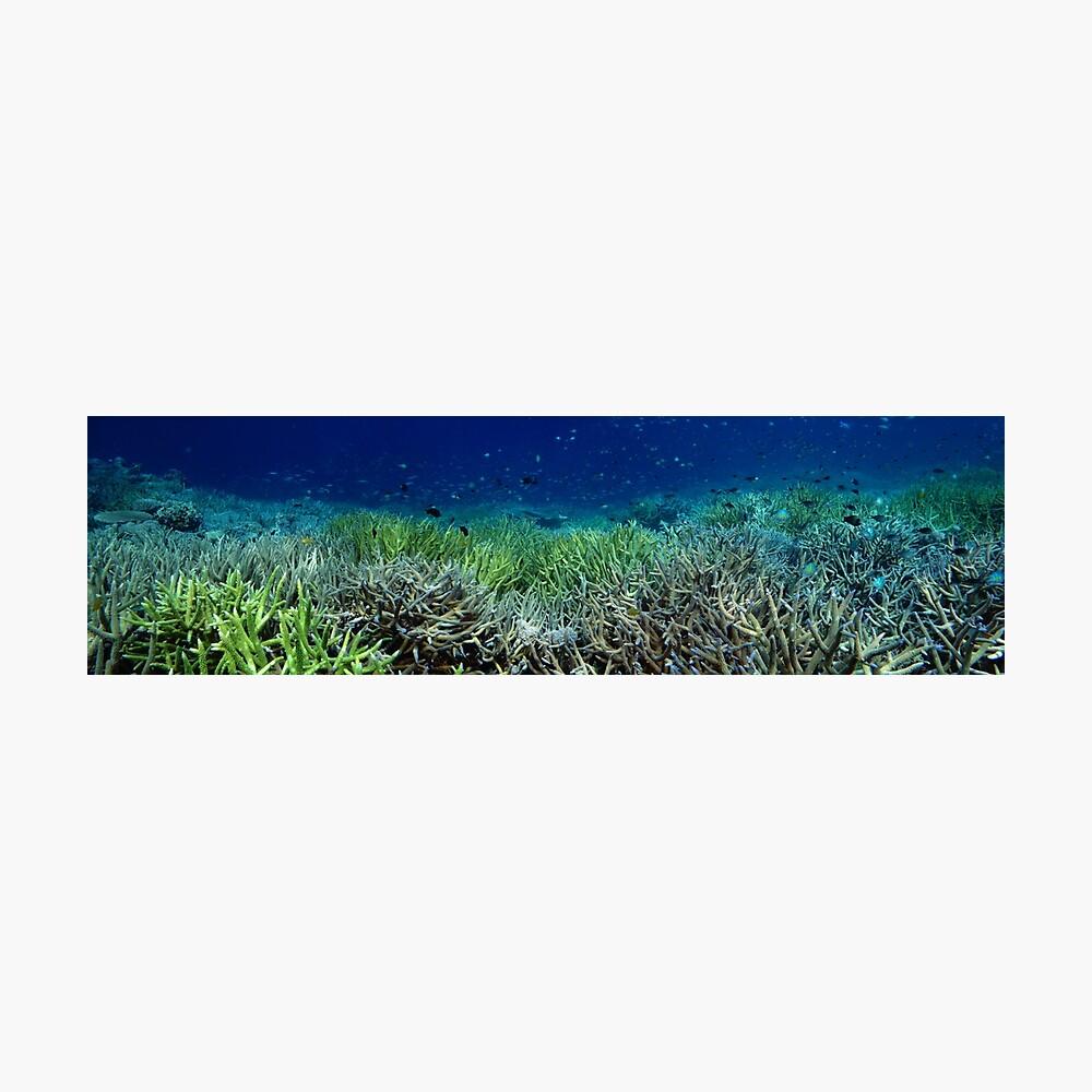 Reef Flat at Kamatal Photographic Print