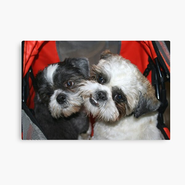 Me and my brother! Canvas Print