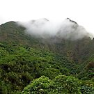 Iao Valley State Park Study 5  by Robert Meyers-Lussier