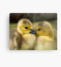 Baby Duck Love Metal Print